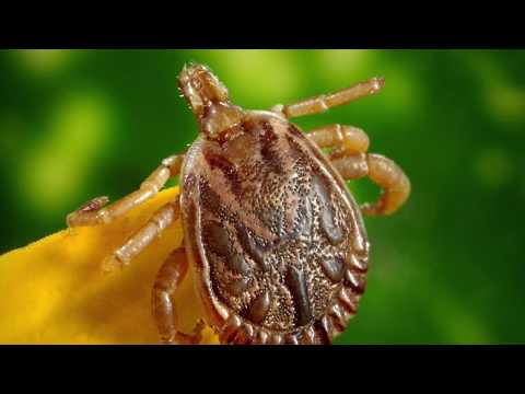 LDUK's Wake Up to Lyme Campaign Video 2018