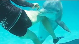 Ozzy Man Reviews: Dodgy Dolphin