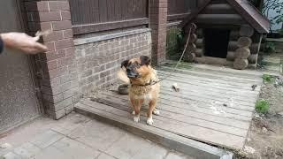 Feeding hungry cute dog