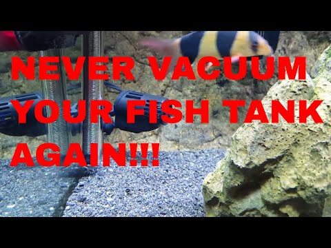 NEVER VACUUM YOUR FISH TANK AGAIN!!!