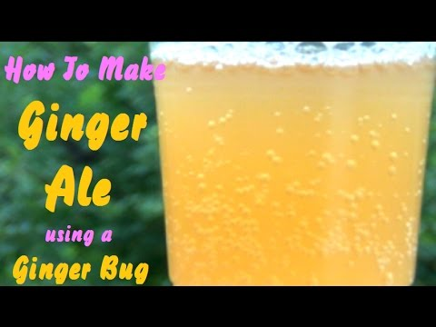 How To Make Ginger Ale Using A Ginger Bug