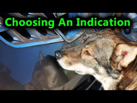 Scent Dog Training, How to Choose An Indication