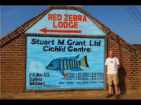 Fish House Tour At Stuart M Grant Ltd - Red Zebra Tours Lake Malawi