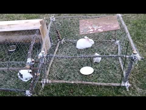 Rabbit Hutch Under $5
