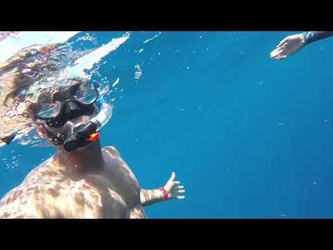GoPro Hero. Florida Shark Diving!