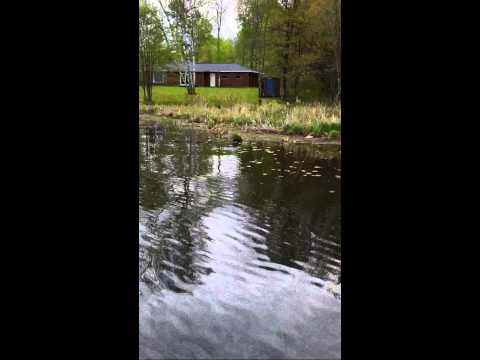 How to catch Bluegills with a Fly Rod