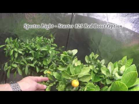 Spectro Light Starter 125 DEMO RED BOOST Option