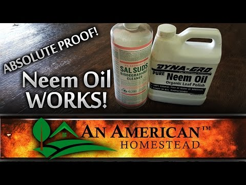 Absolute Proof That Neem Oil Works!