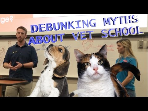 The TRUTH about Vet School | UGA Open House Vet Student Q&A 2017