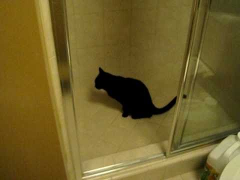 Cat Peeing In Shower Drain