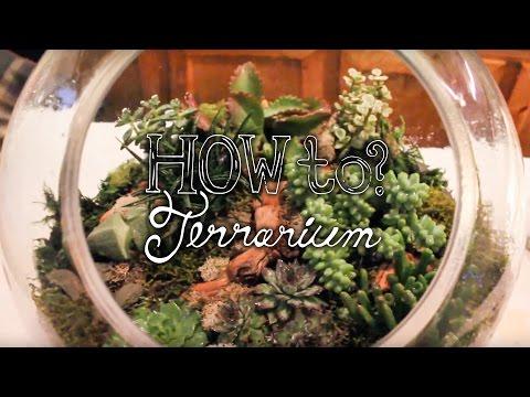 Make a Succulent Terrarium - How to Terrarium ep. 1