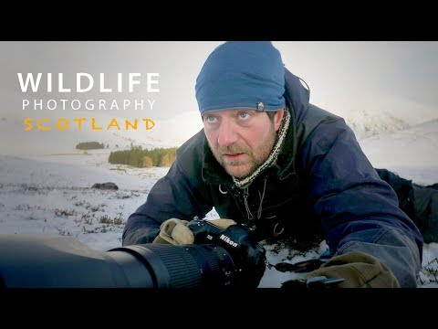 PHOTOGRAPHING MOUNTAIN HARES part 2 | Wildlife photography in Scotland