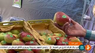 Iran Organic Apple harvest, Damavand county برداشت سيب شهرستان دماوند ايران