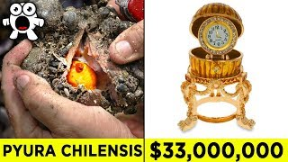 Lucky Discoveries That Made People Rich