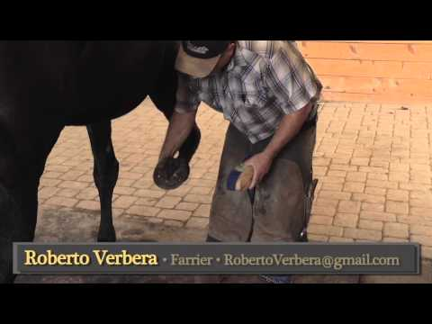 How to re-educate a resistant horse to pick up its feet part two