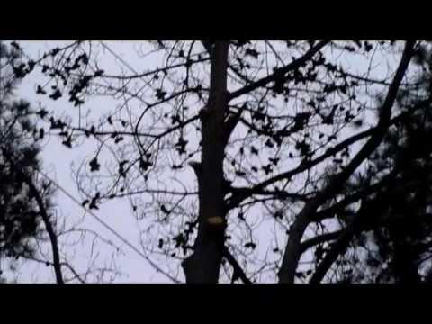 Georgia Power changed tree fall direction