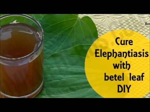 Betel leaf to cure elephantiasis - Home remedy