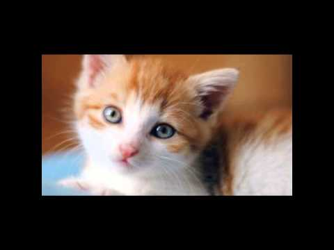Top Picks for Cats Urine Removal Products!