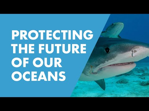 SeaWorld & OCEARCH: Join Forces to Save Marine Wildlife