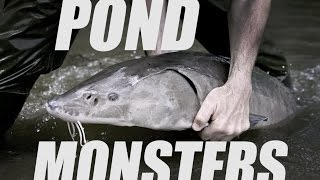 HE CAUGHT WHAT? Look at the size of these pond monsters!!
