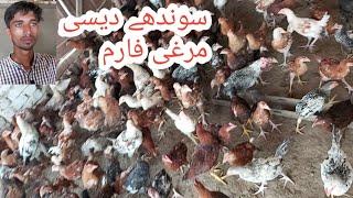 Poultry Farm in DDP-Desi Murghi Poultry Farm - PakVim net HD