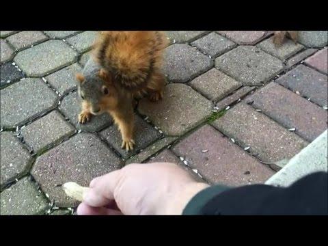 I made a new friend, a squirrel. Fun feeding wild animals.