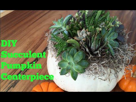 Pumpkin Succulent Centerpiece DIY