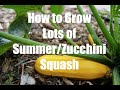 How To Grow LOTS of Summer/Zucchini Squash  - in 4K