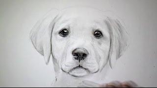 Dessin de chien boxer comment dessiner gullutube - Dessin chien boxer ...