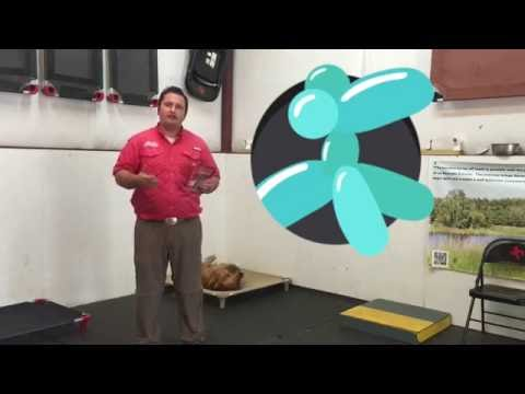 How to help your dog with LOUD NOISES! Thunder,Fireworks,Gunshots...