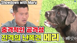 Showdown with The most aggressive Tyrant dog 'Mary' [Dogs are incredible][It like a Cesar`s show]