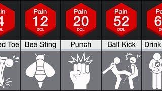 Comparison: Human Pain