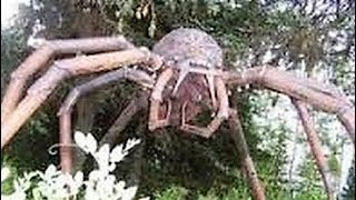 WEIRDEST Insect & Spider Cryptids