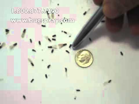 Get rid of termites - Termite Swarmers