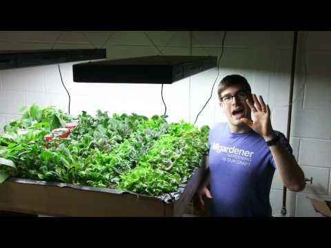 Growing Salad Greens Indoors is Financially Sustainable!