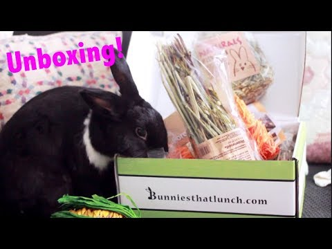 Unboxing Bunnies That Lunch