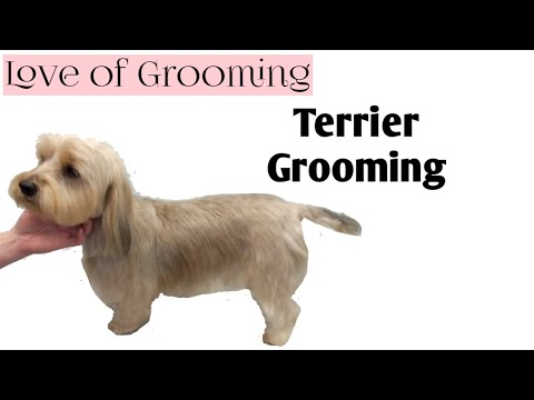 Grooming  a Terrier Mix
