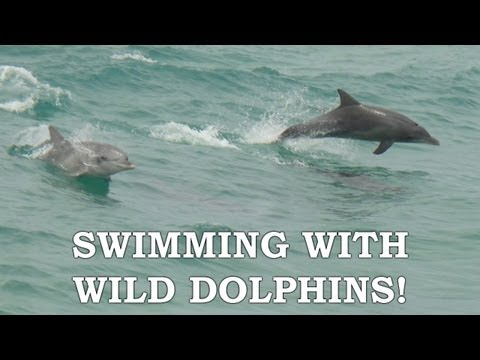 SWIMMING WITH WILD DOLPHINS! - Highlights Reel | Rockingham, Western Australia