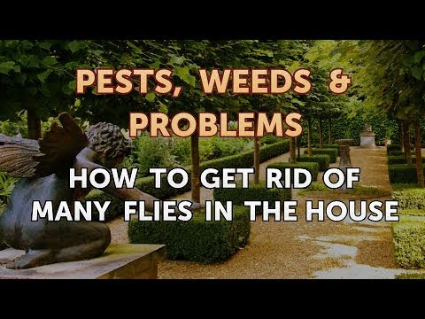 How to Get Rid of Many Flies in the House