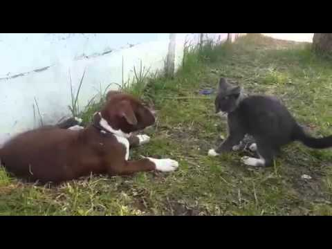 Cute cat and dog play fight