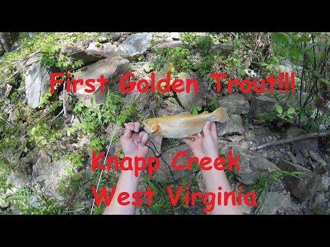 Knapp Creek West Virginia Trout Fishing. First Golden Trout!