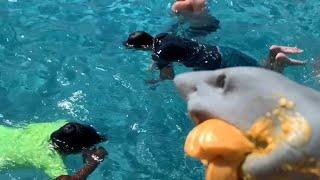 SHARK PUPPET THE LIFEGUARD!!!!!
