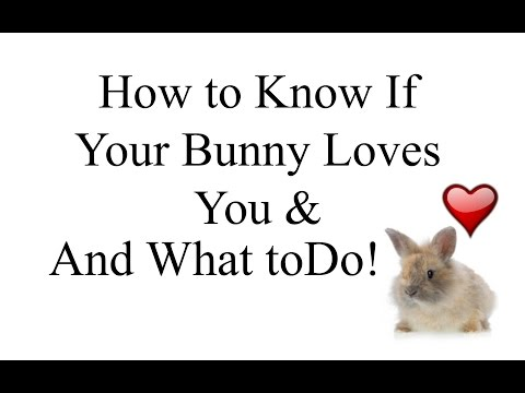 How to Know if Your Bunny Loves You, What to do and CARE TIPS