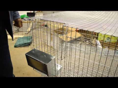 The Best Rabbit Hay Rack