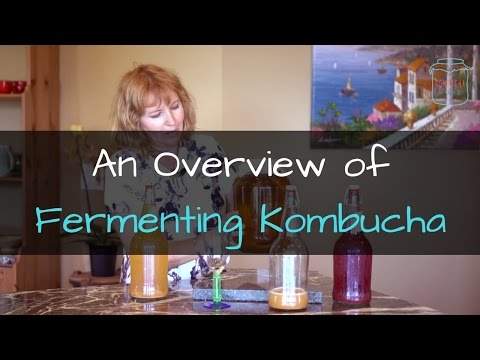 First and Second Kombucha Ferments - An Overview