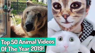 Top 50 Viral Animal Videos of the Year 2019!  (Best Of The Year)