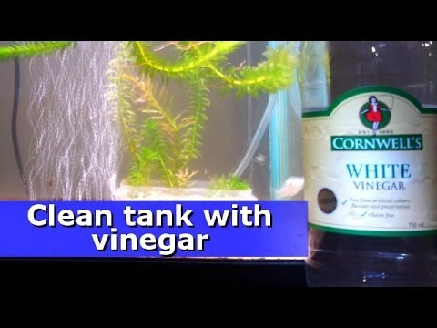 Clean the outside of your fish tank