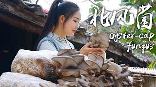 Fungus - Favorite Ingredient of Yunnan People