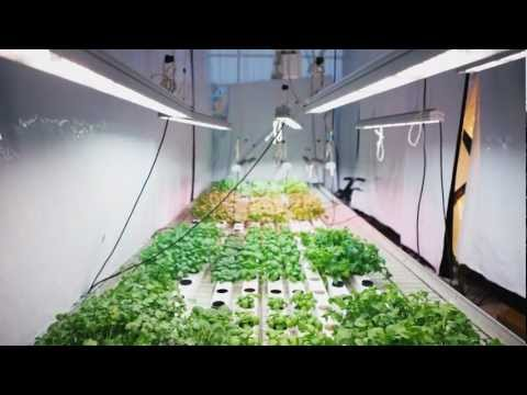 Valoya Research. Lettuce and Herbs: How Valoya LED Lights Control and Enhance Growth.