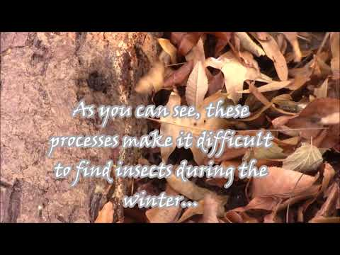 Insects During the Winter